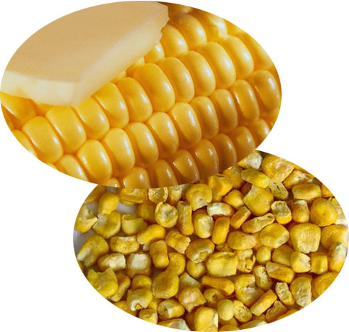 Sweet Corn - Click Image to Close